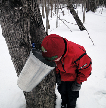 Time for Maple Syrup in the Mt. Washington Valley, NH