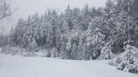 Trees heavy with snow.