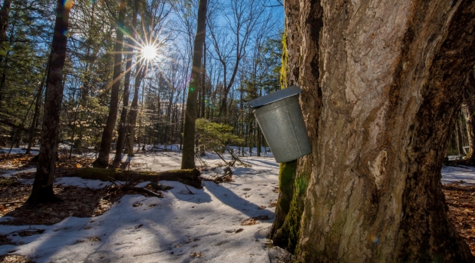 Maple Syrup in the Mt. Washington Valley!